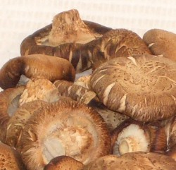 shiitake_china_detail[1]