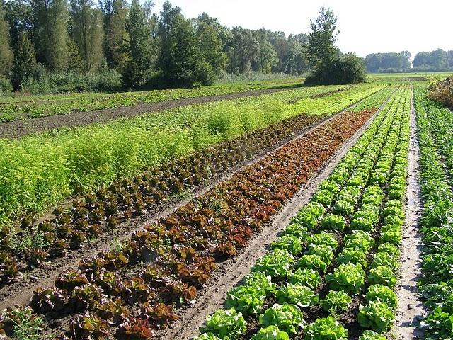 Biodynamische-landbouw