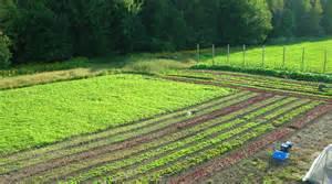 Kleinschalig biologisch boeren